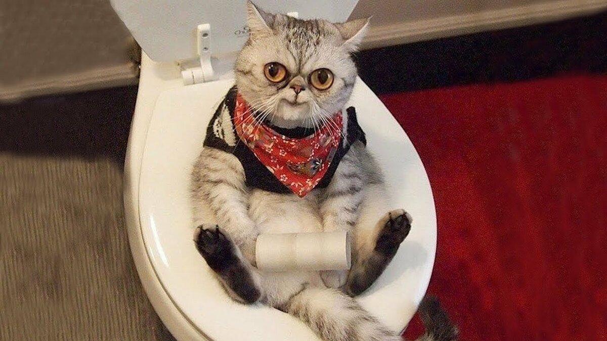 любите картинки про приколы с кошками очень смешные до слез 2016 поделиться опытом патриотического
