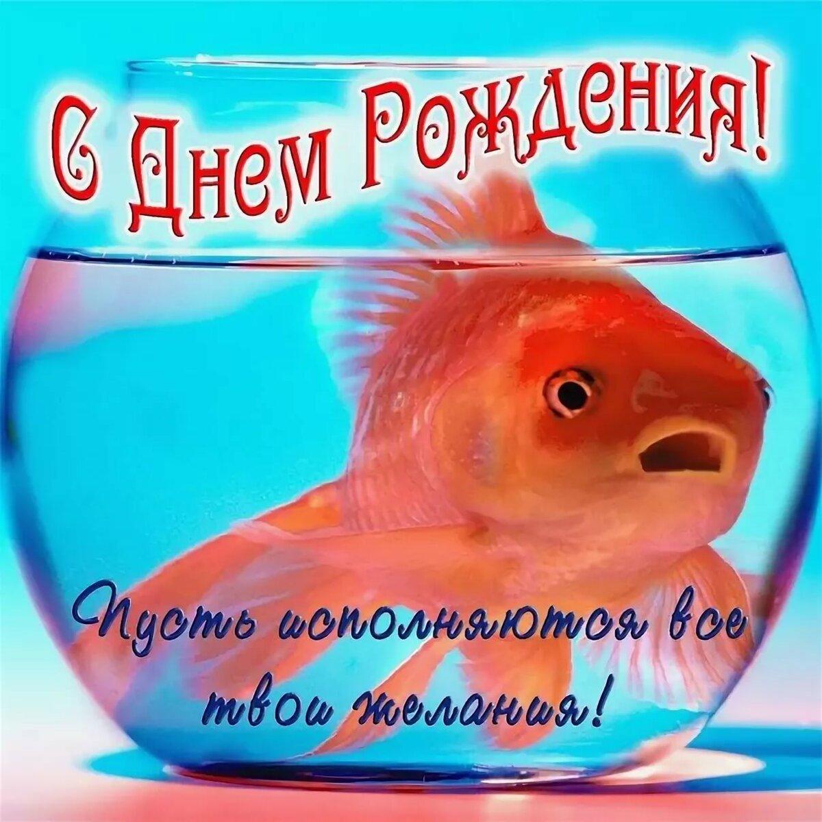 уютный паша с днем рождения картинки прикольные рыба изменила выкройку