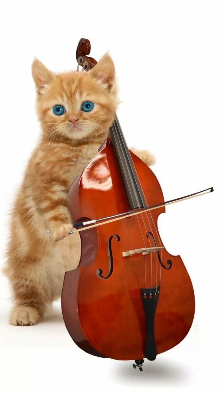 Животные и музыка в картинках