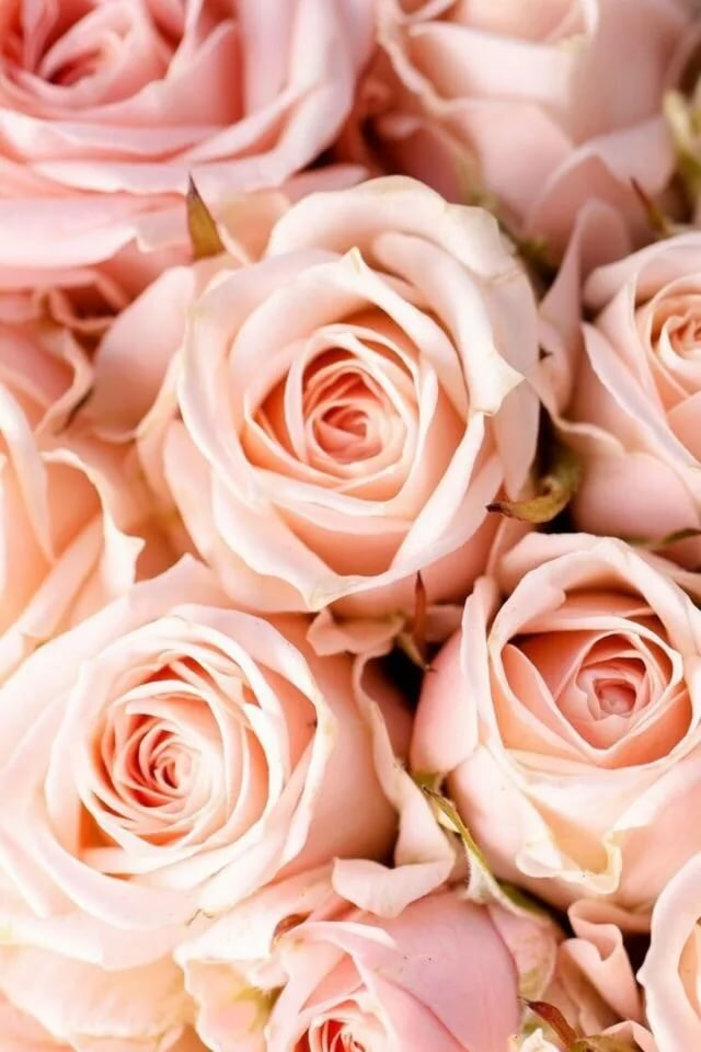 ней индира картинки с розами этого был
