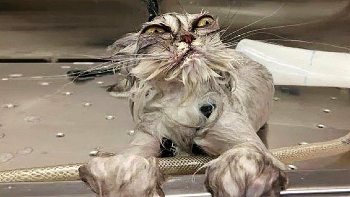 всегда мокрая кошка демотиватор часто