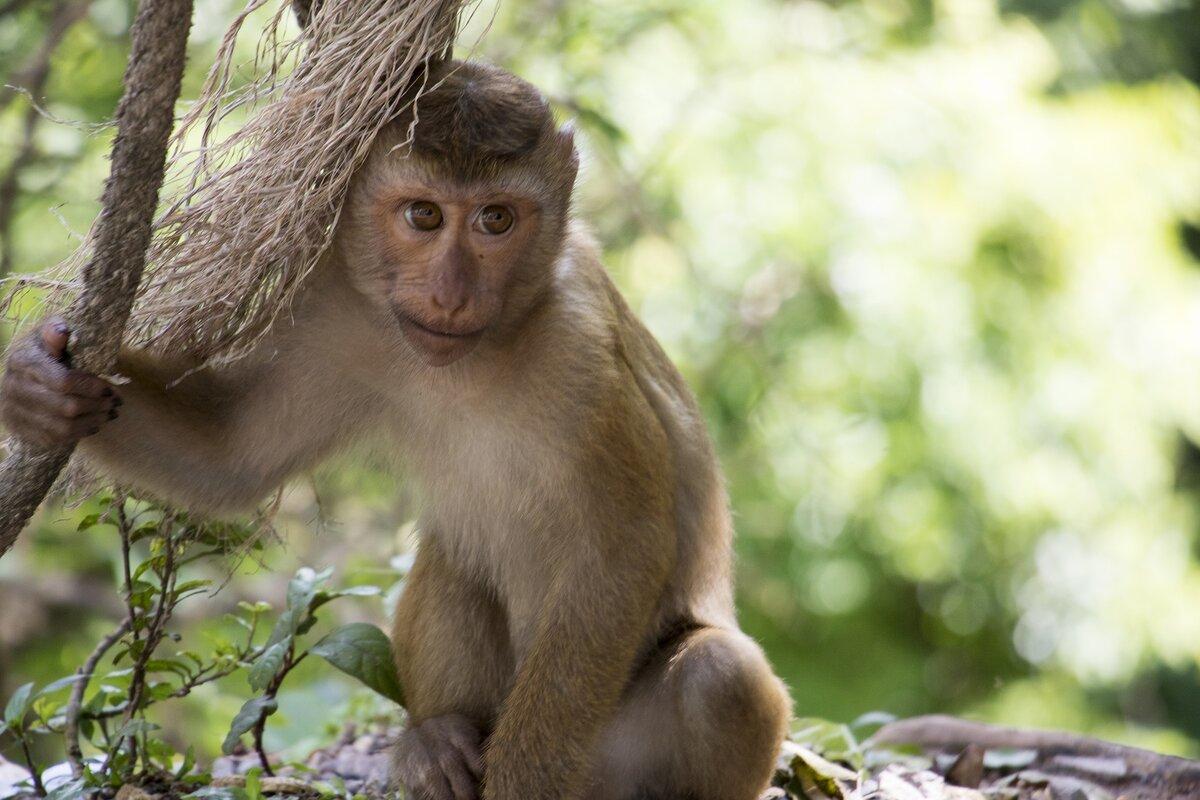 них обезьянка в картинках фото соответствующие указанным выше