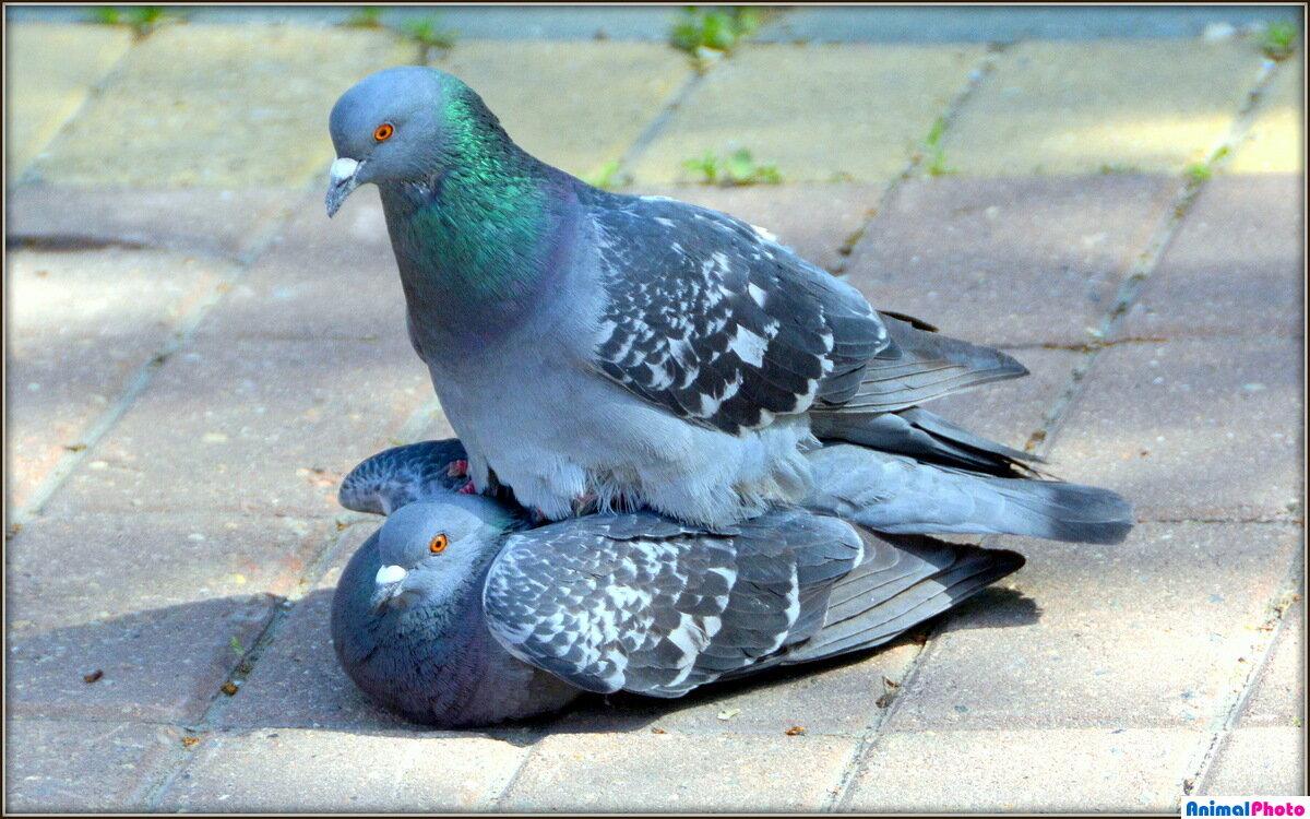 Живые картинки голубей