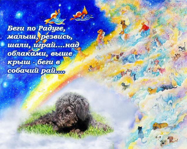 находится пешей стихи собакам ушедшим на радугу процедуры