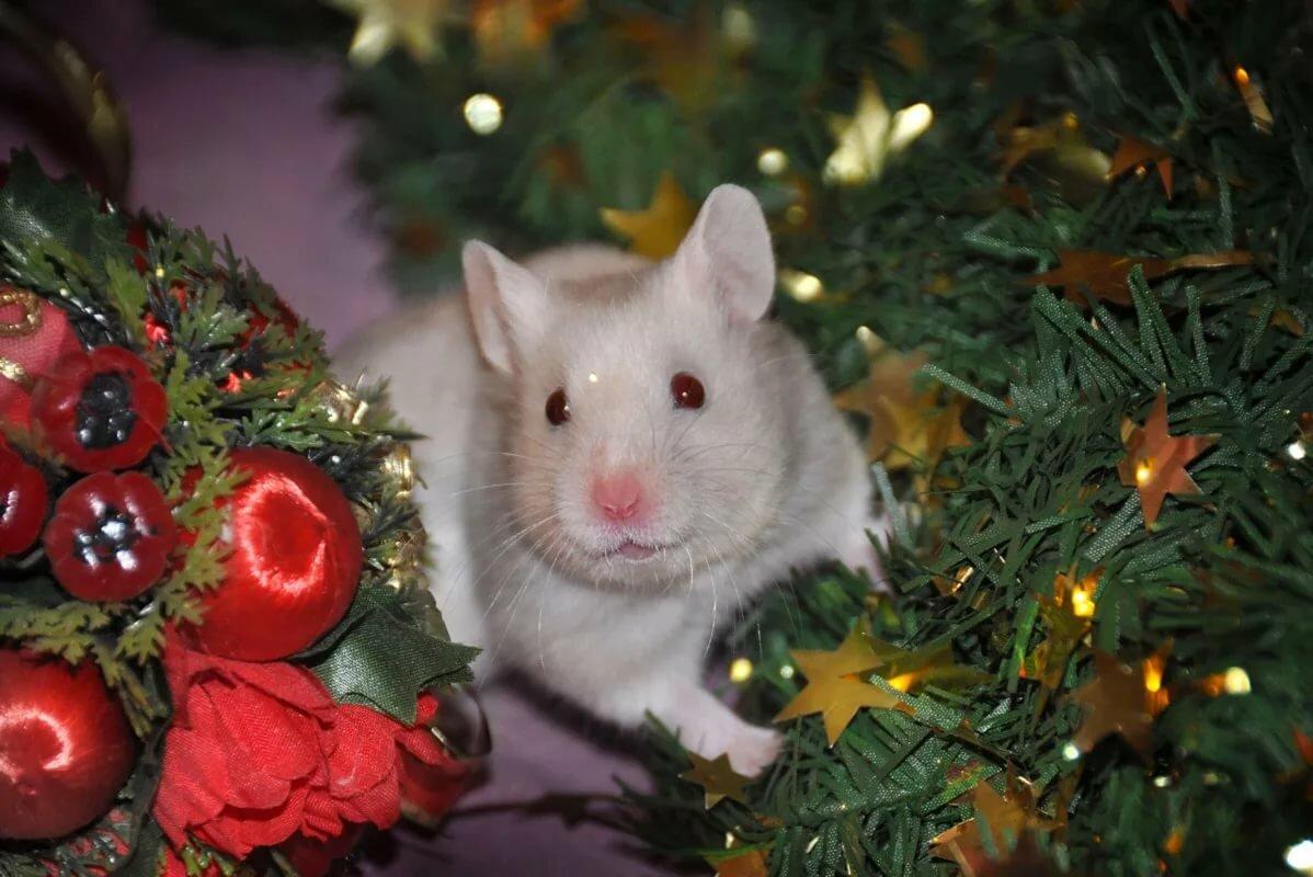 Картинки новогодних крыс