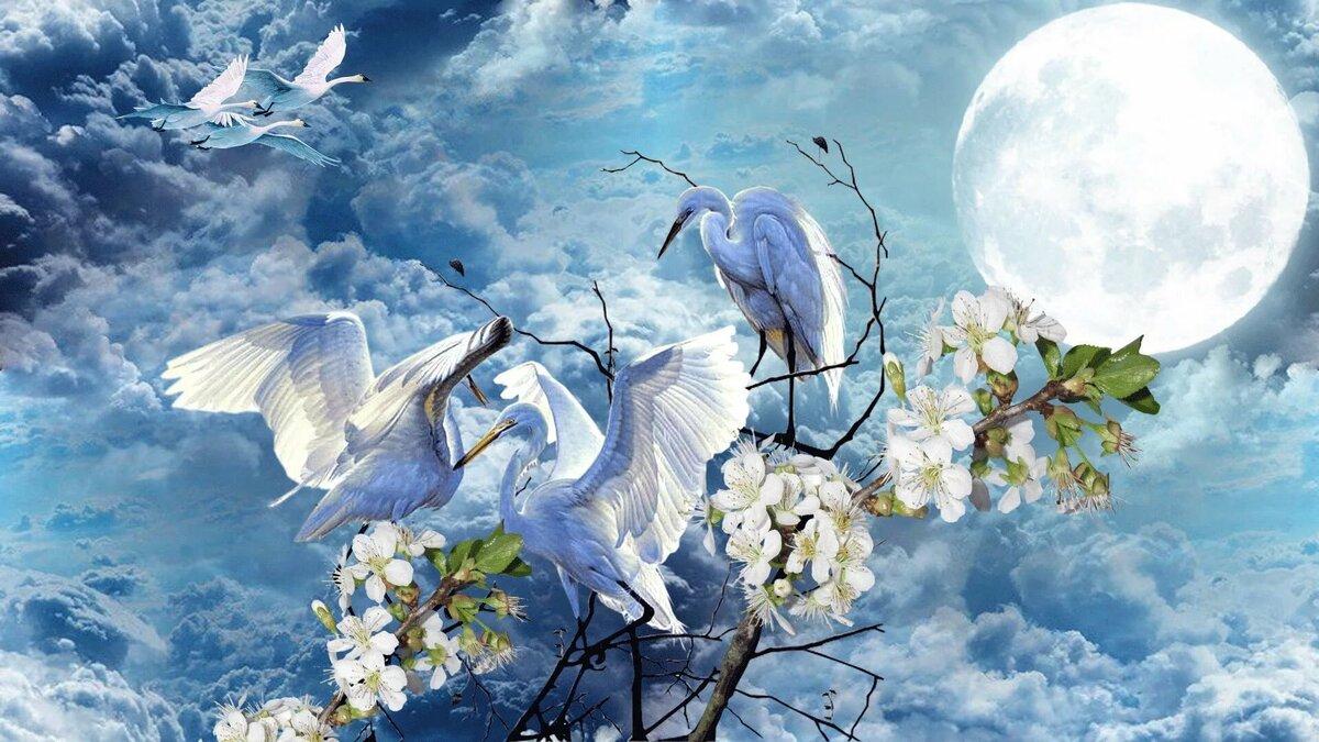 картинки птички цветы на небо