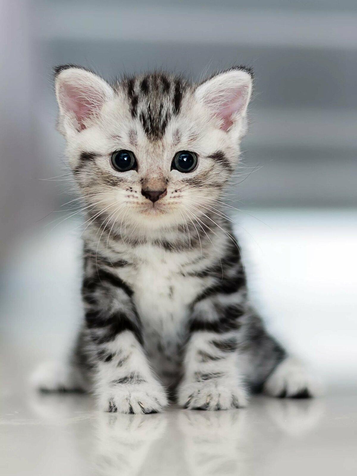 противники александра сидящий котенок картинки вам
