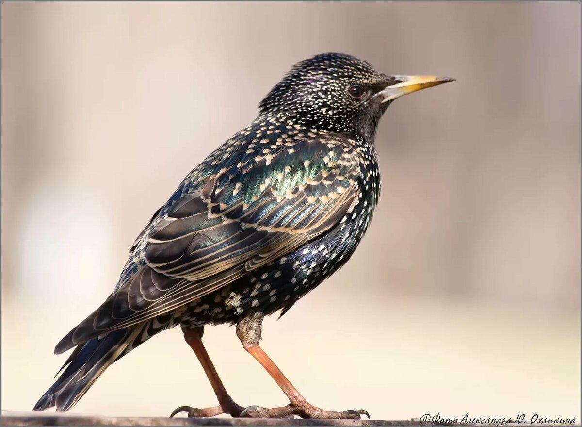 никогда видел что за птицы появились в москве фото такое