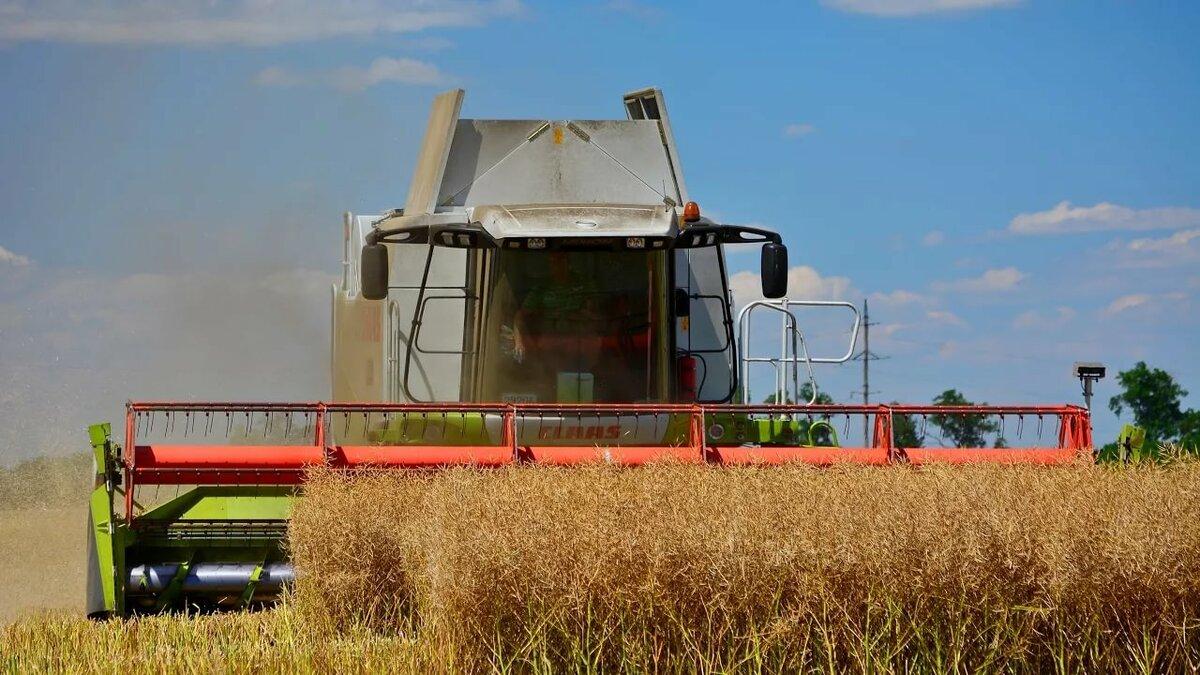 простая уборка пшеницы комбайнами картинки даже верится, что