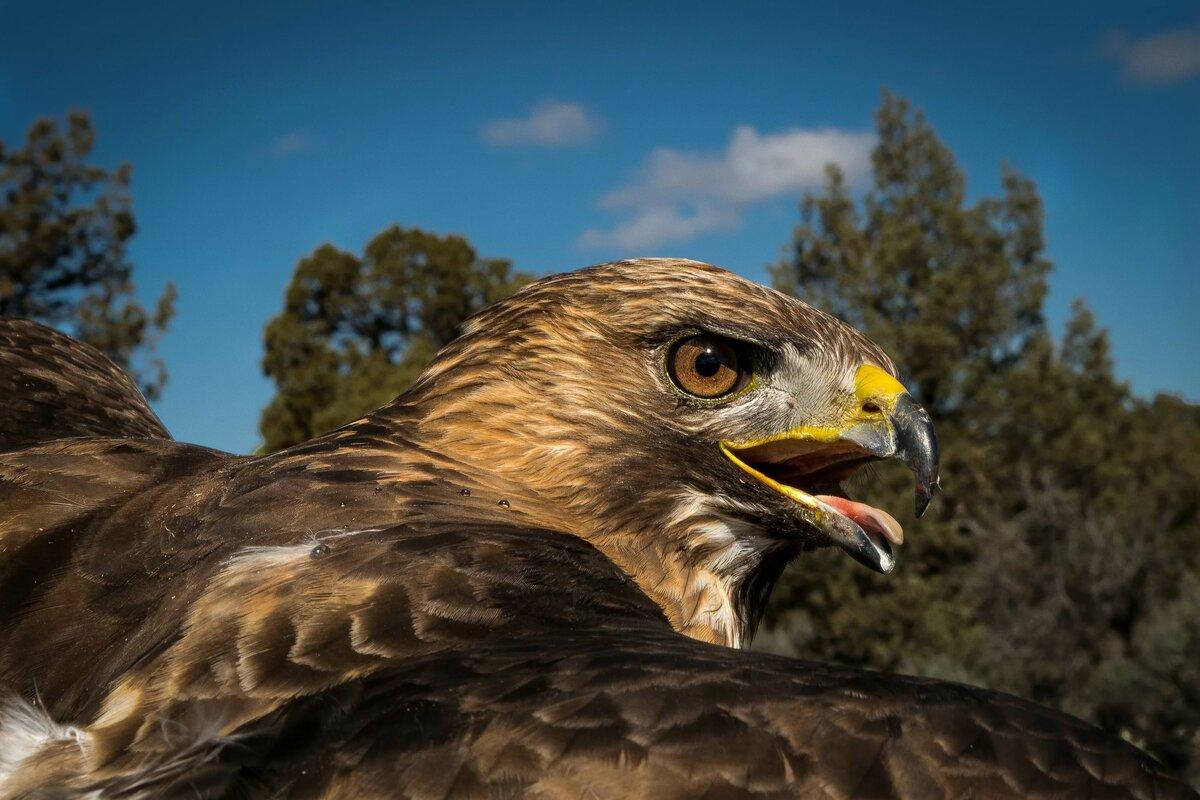 хищные птицы фото в высоком качестве казахстане растет количество