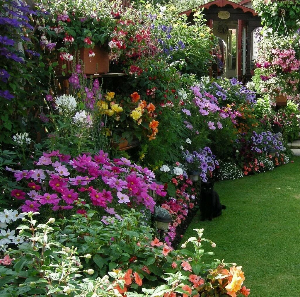 Цветники в саду фотографии