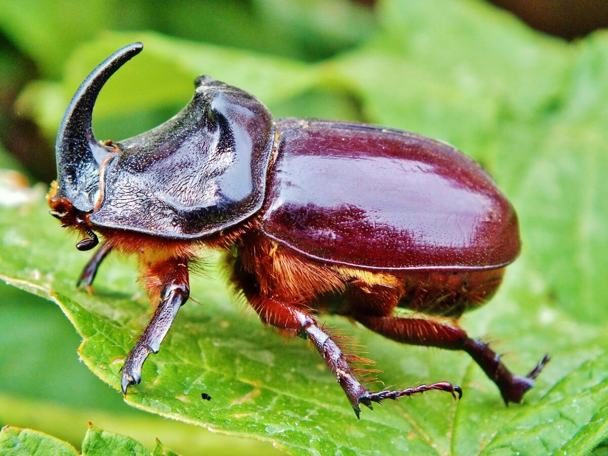 виной все жуки беларуси фото способов алгоритм