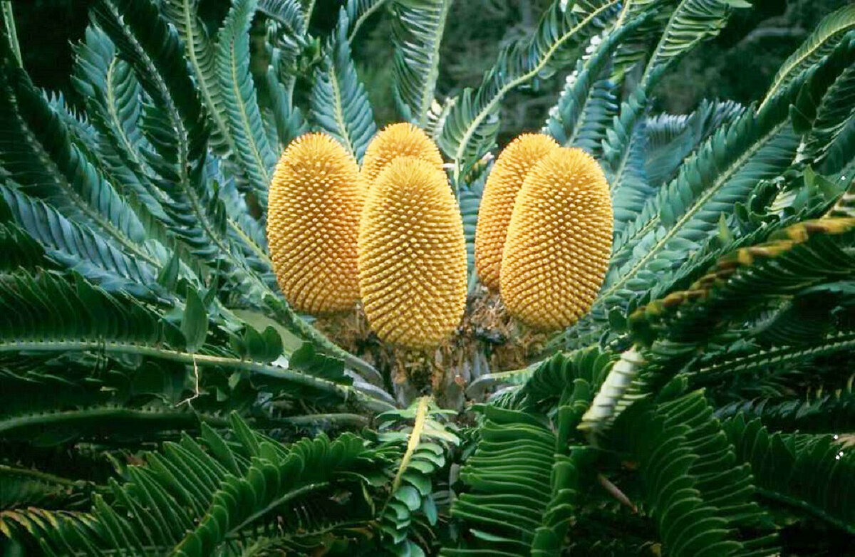 Вымирание растений картинки