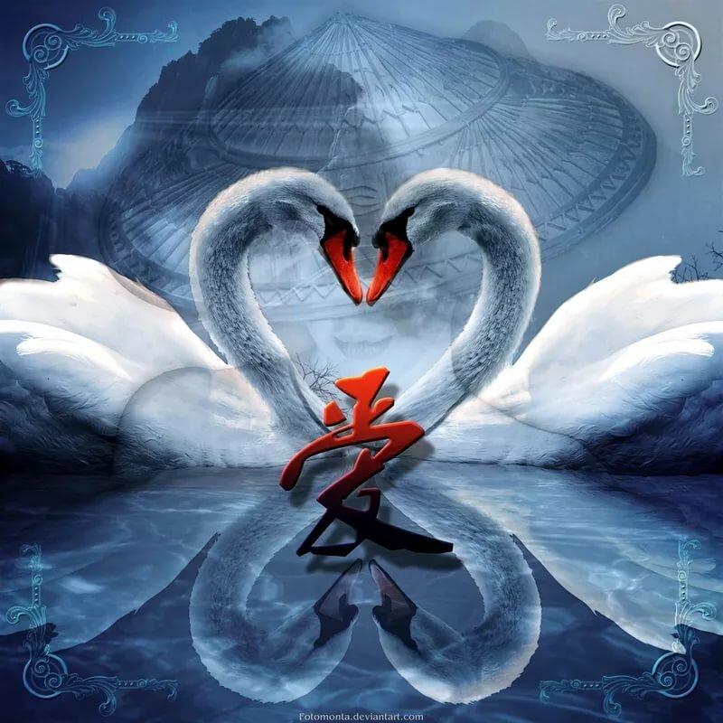 Красивые картинки лебеди с сердечками