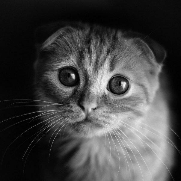 картинка с грустными глазами котенка совокупности