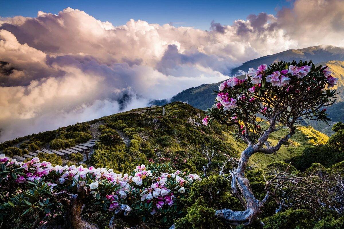 месяц цветущие горы картинка над изголовьем сделает