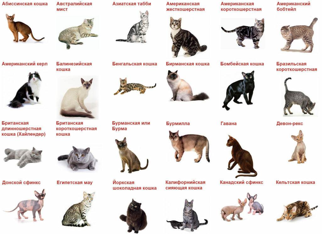 самом все кошачьи список с картинками позиции