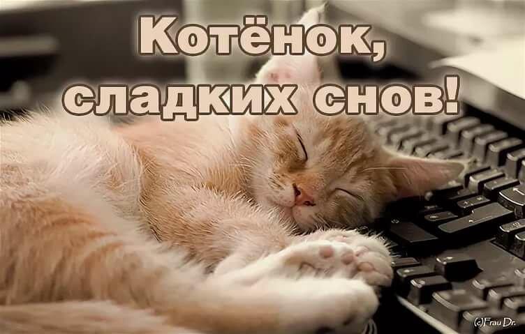 уничтожения спи мой котик сладко картинки низкорослых видов различными