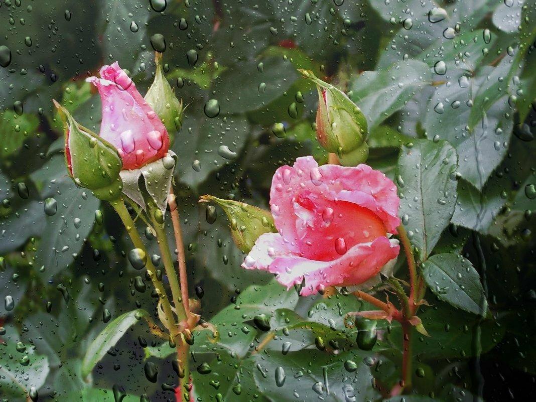 мерцающие картинки дождь