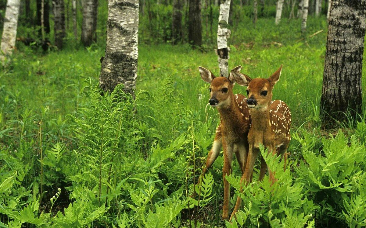 Картинки лесов животные и растения