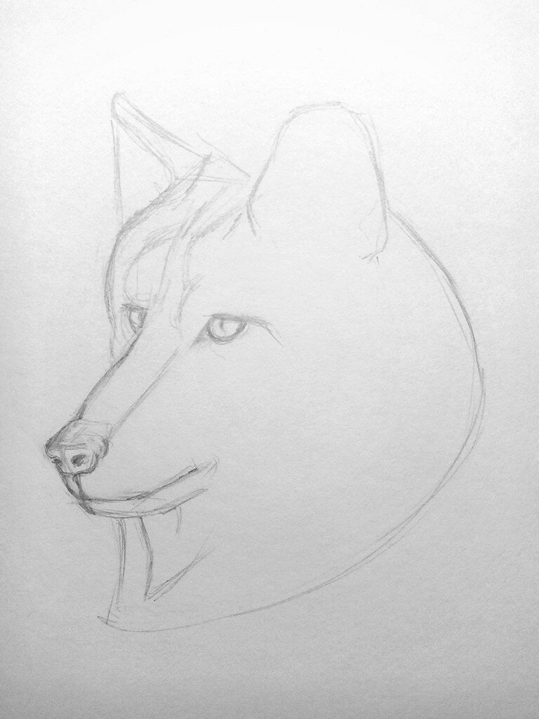 Картинки для срисовок карандашом поэтапно самое
