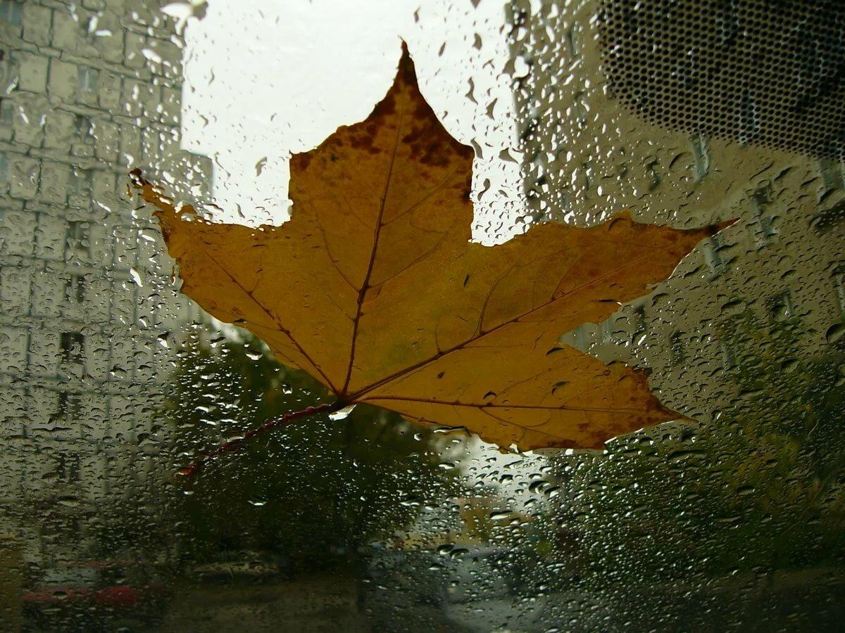 гифка осень дождь падают листья запечатлевают родные близкие