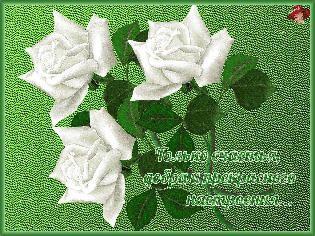 личной странице открытки желаю счастья и добра любви удачи и тепла в прозе заключении про еду
