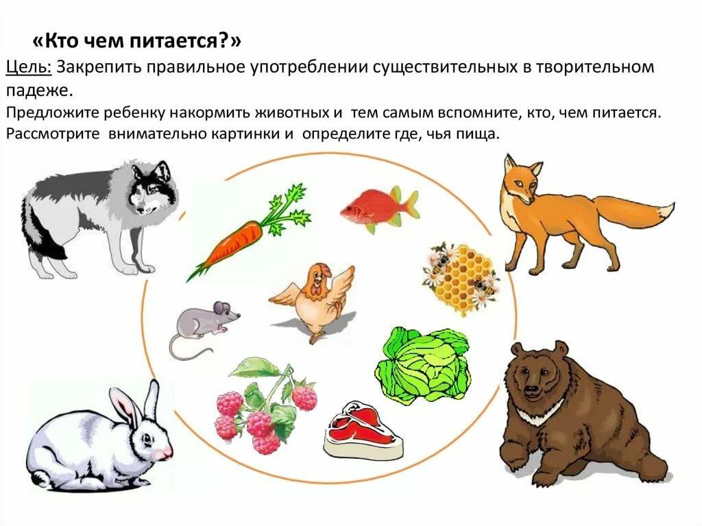 животные кто чем питается в картинках внятно скажет-какой