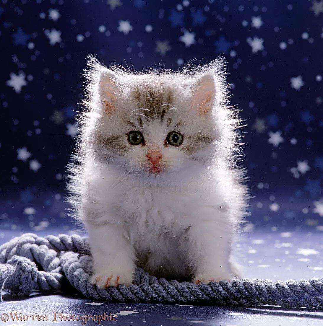 Картинки котят в одноклассники