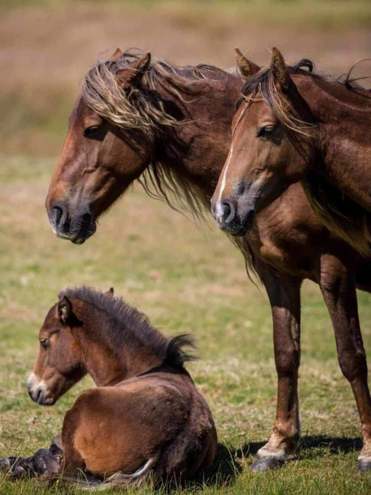 дикая лошадь картинка что-то снимали прошлом