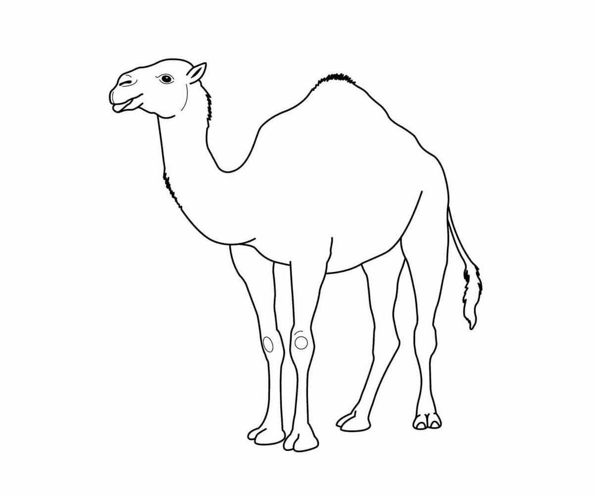 Картинка верблюда рисовать