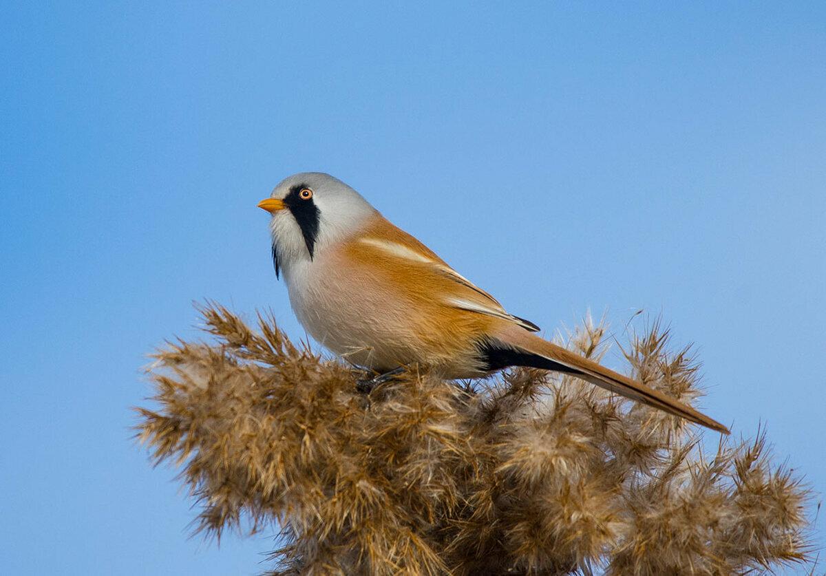 отдыха фотографии разных птиц россии угловой, электричество