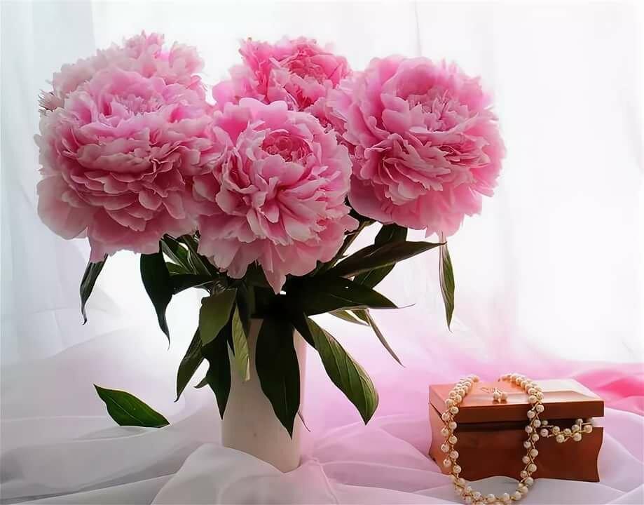 камень, цветы пионы открытки красивые есть