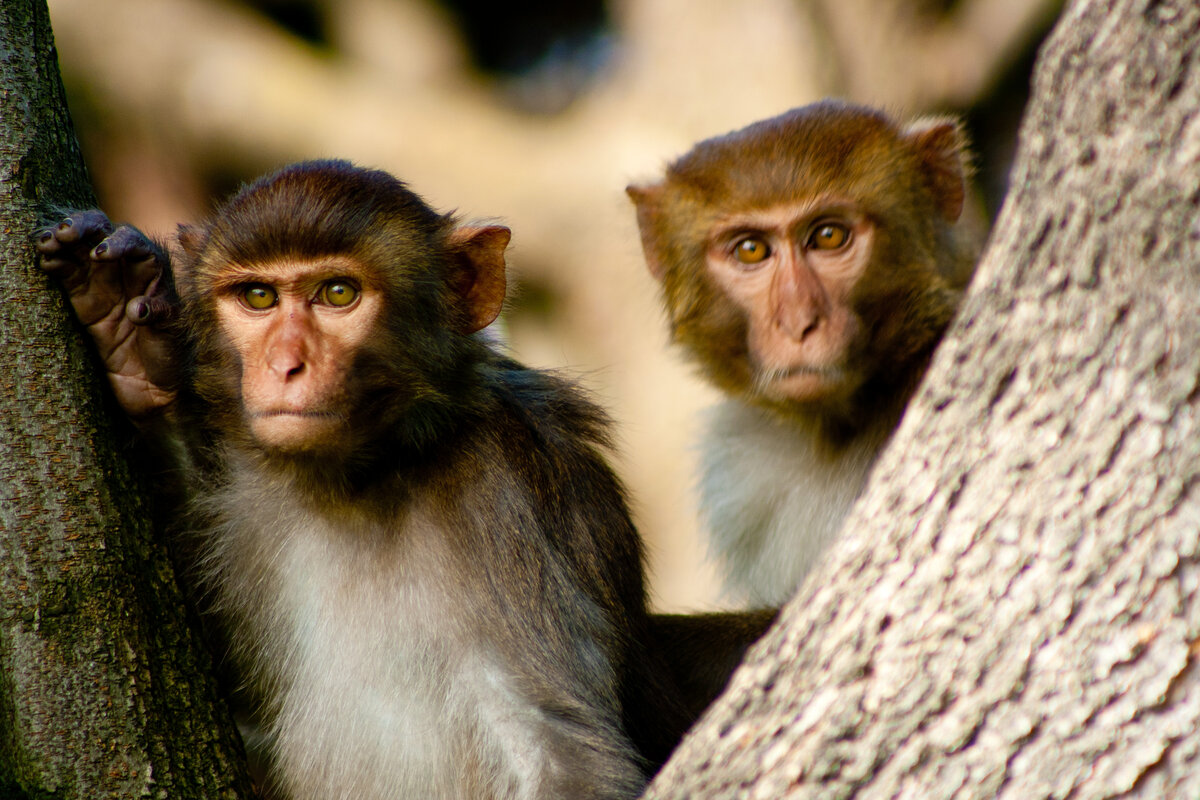 Картинки про веселых обезьянок
