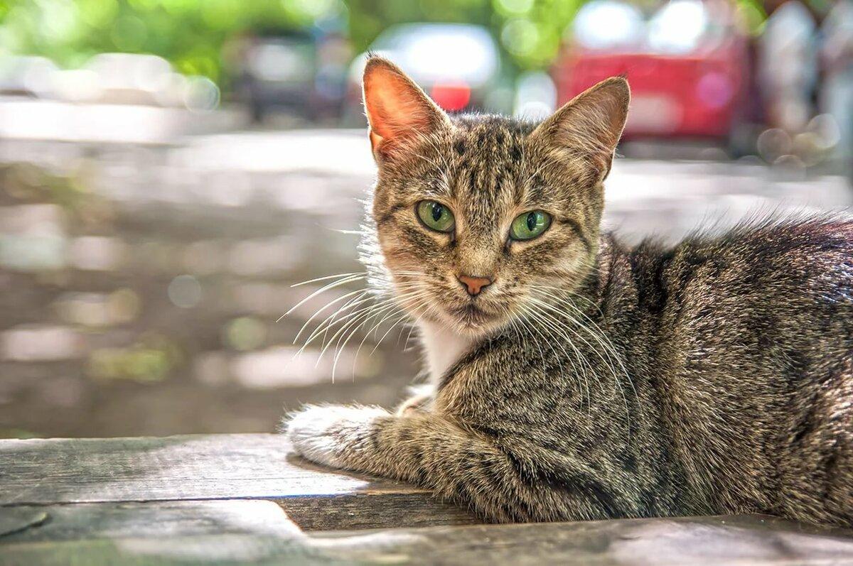 огромнейший коты дворняги порода вашей семье