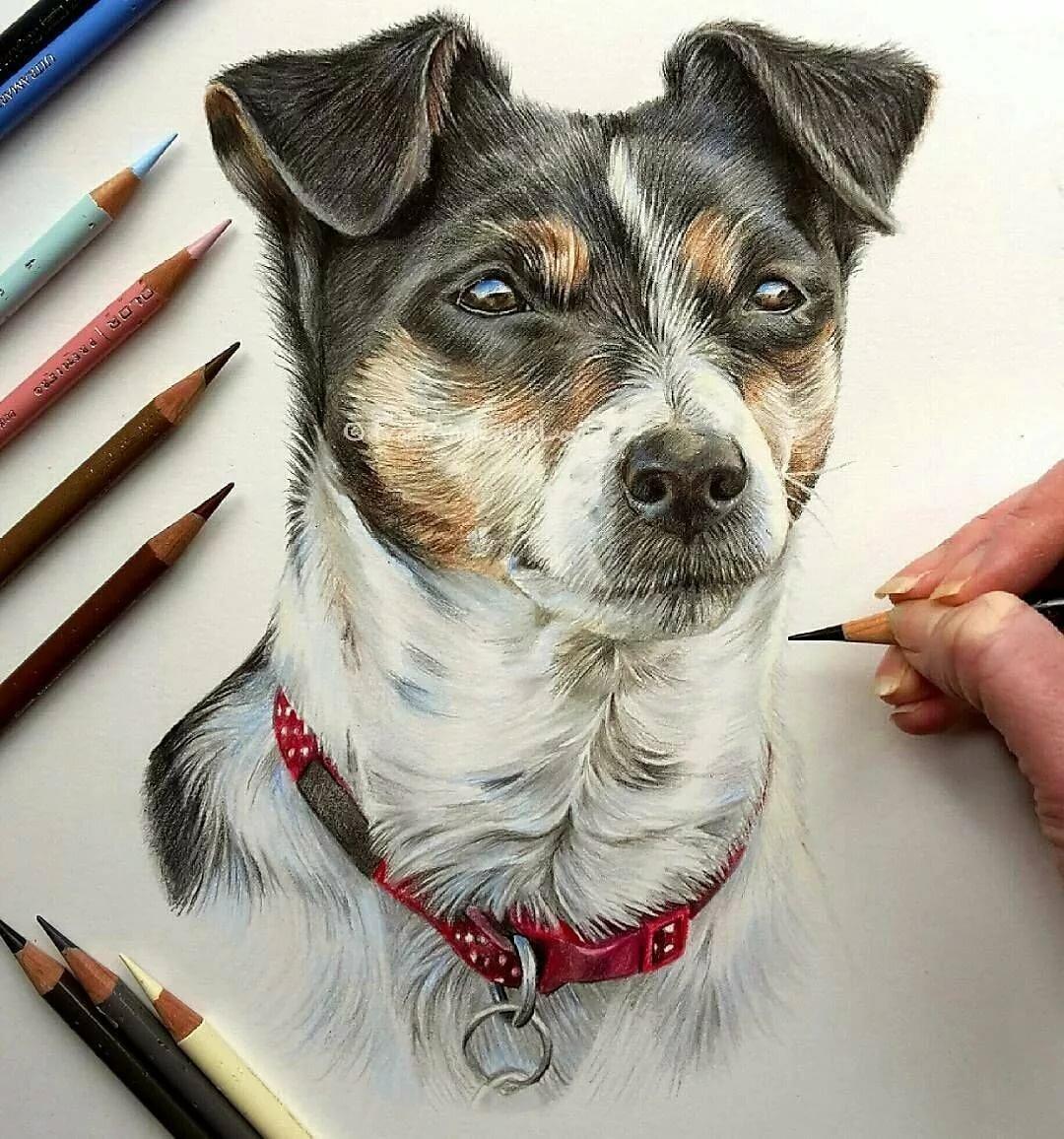 профессионально рисовать картинки сможете