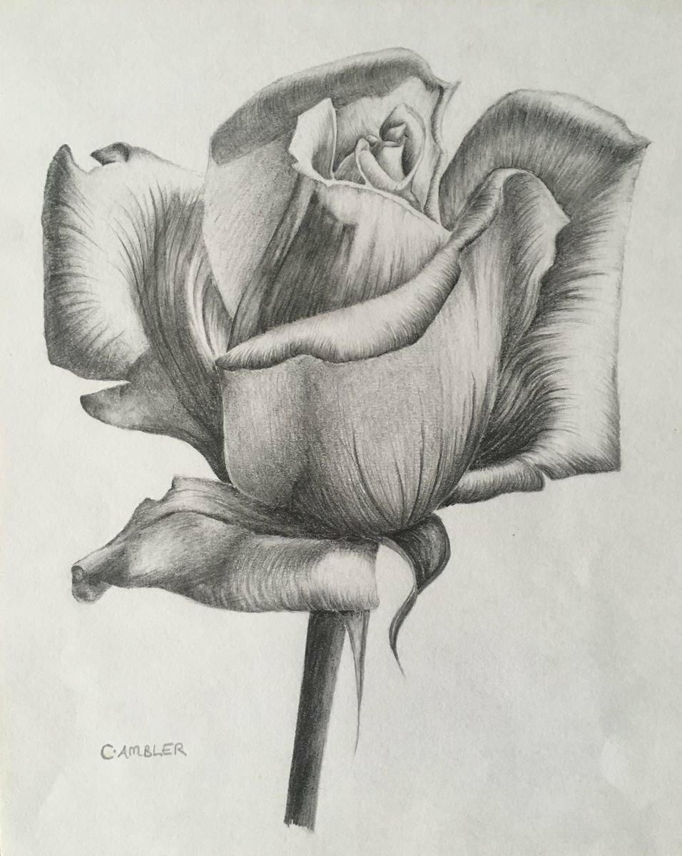 Картинки цветов карандашами