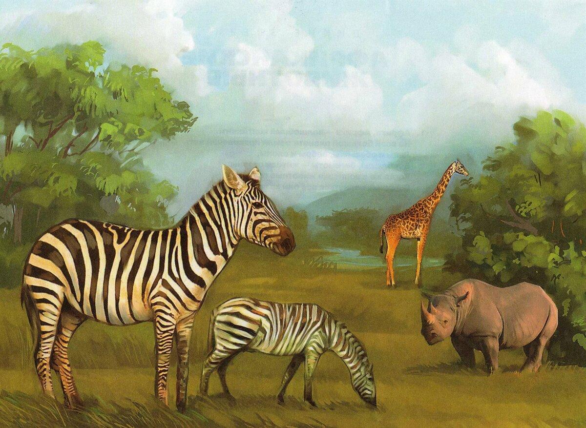Животные жарких стран старшая группа картинки