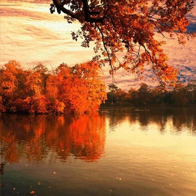 Картинки осени красивые природа мерцающие