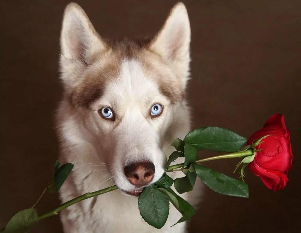 Волк дарит цветы картинки