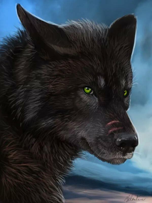 Альфа волки картинки
