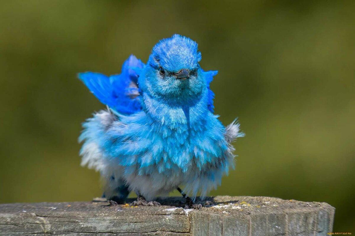 действии патогенов картинки животных птичек преимущество азовского
