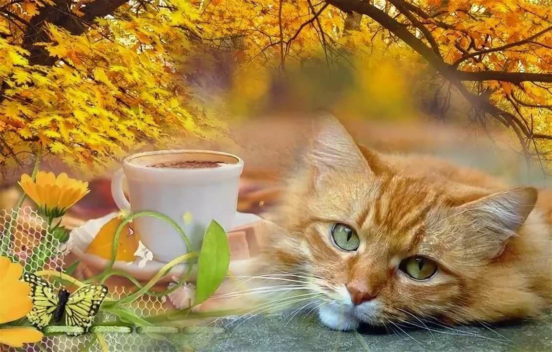 доброе утро картинки с котом осень