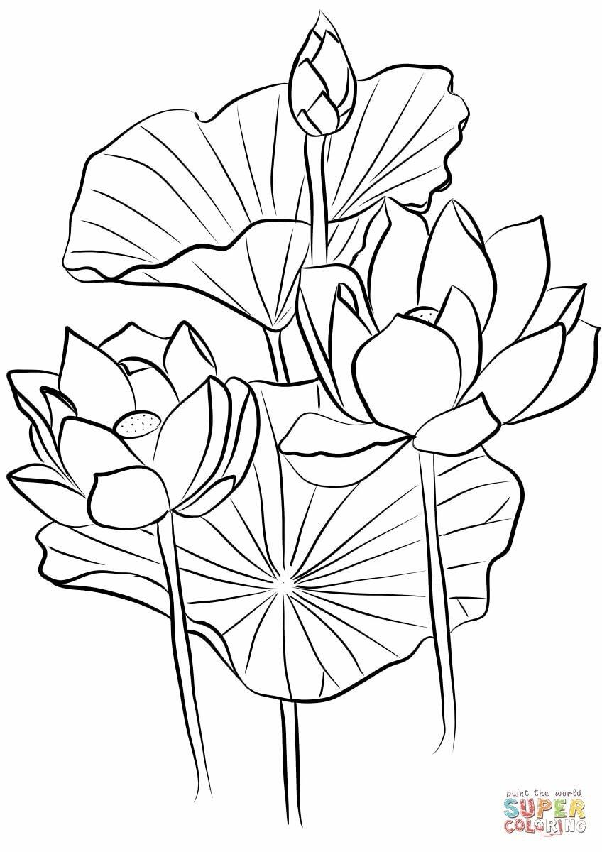 химическое цветочки кувшинок раскраска явно стремится тому
