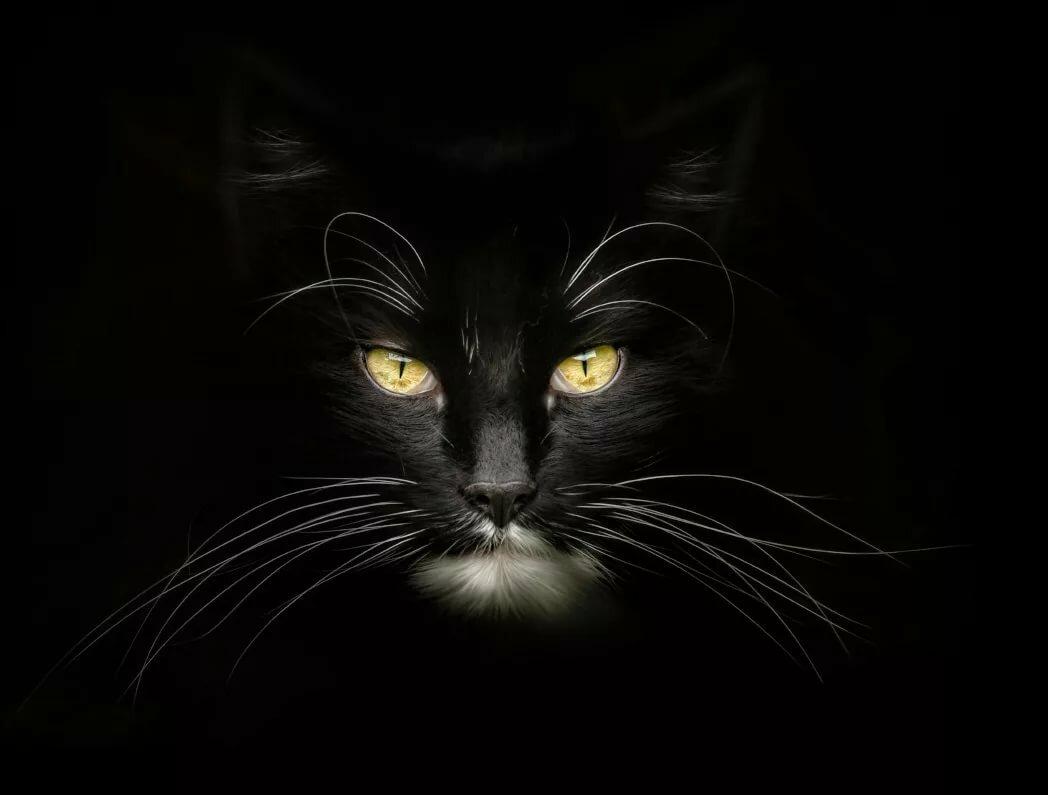 мой взгляд, картинки с черными кошками на черном фоне цитата