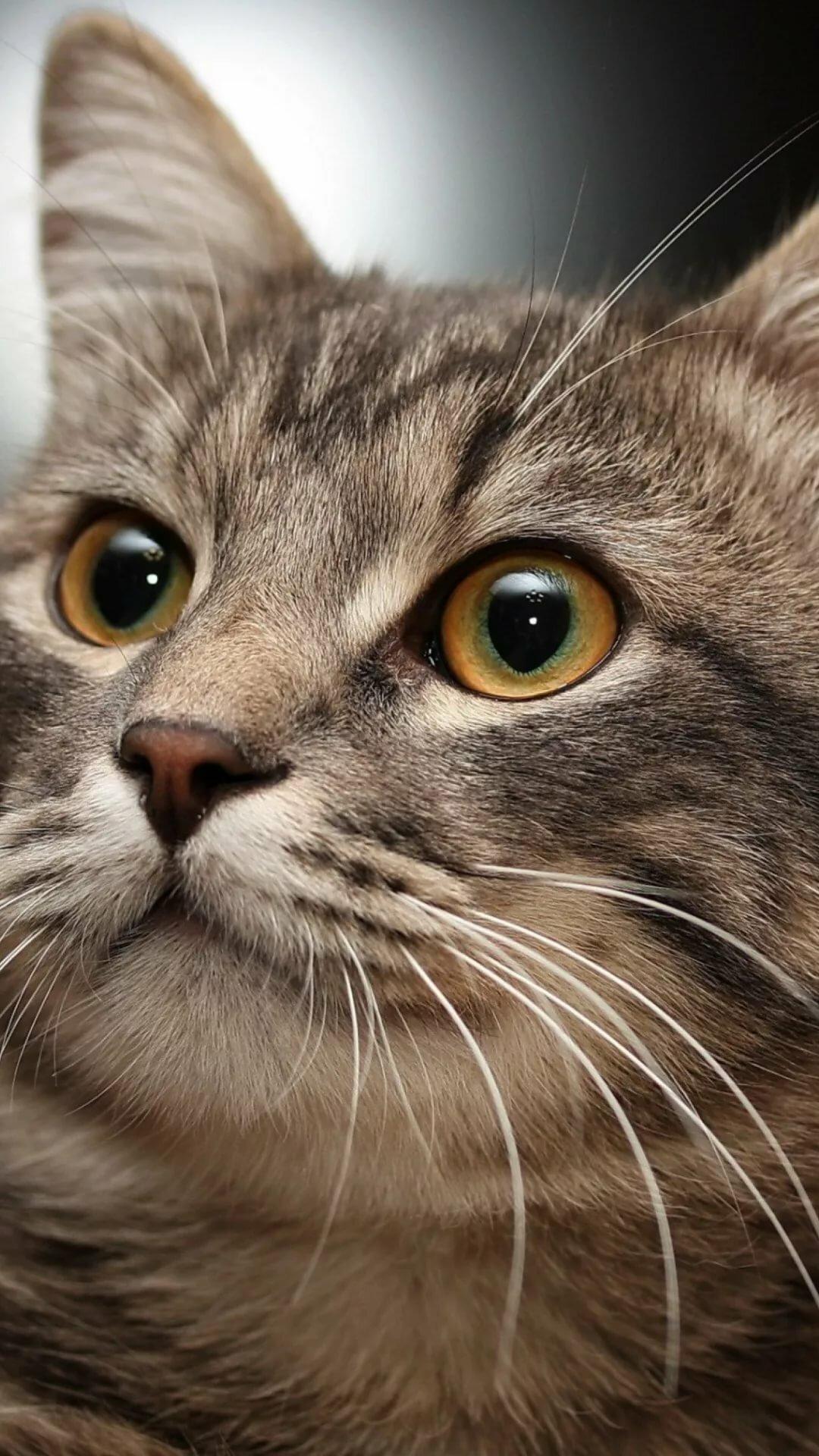 Кошки картинки для телефона