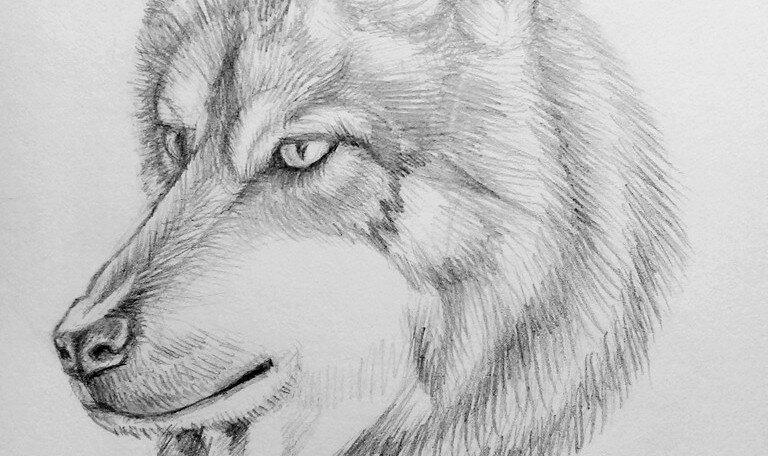 Нарисовать красивые рисунки животных карандашом
