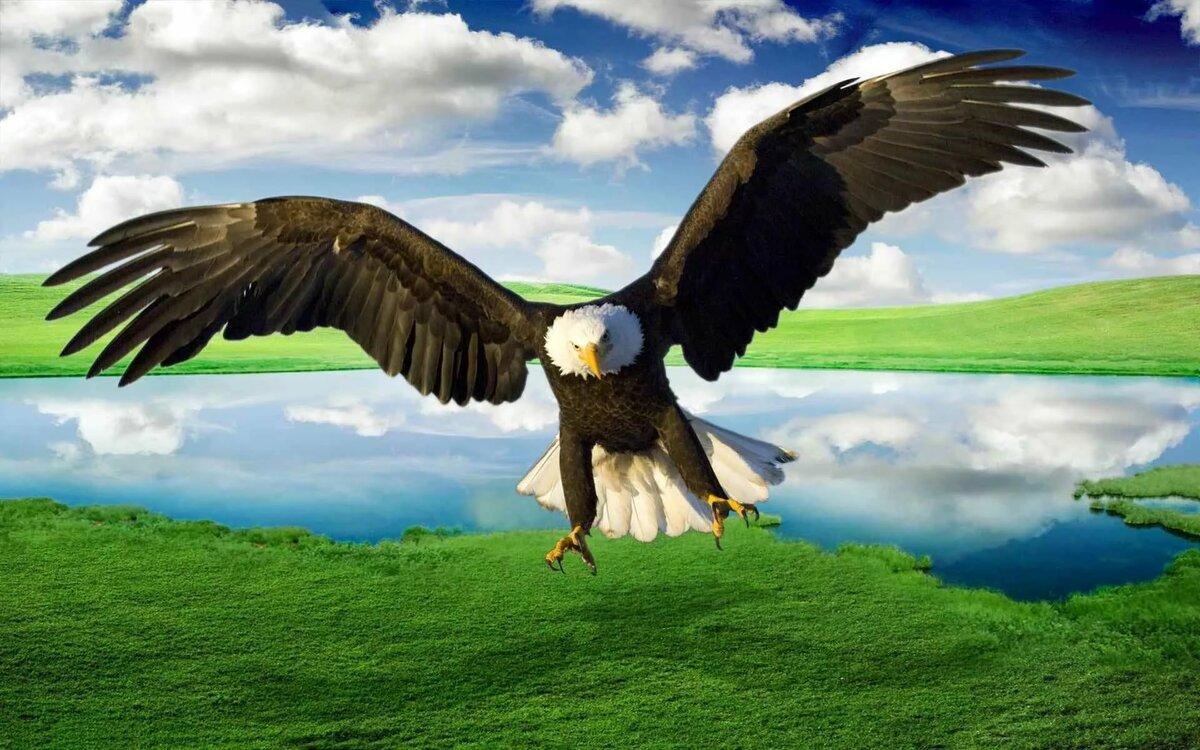 Пейзажные фото птицы в полете
