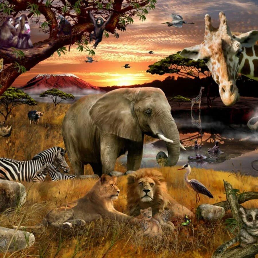 тому картинки всех животных картинки всех животных покупатель, все отлично