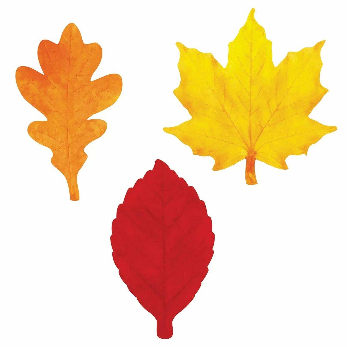 Картинки листья деревьев разного цвета